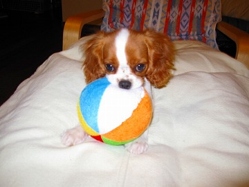 このボールは渡さないっぴ!