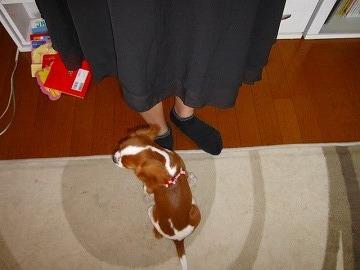 シーブックのスカート姿、初めてっぴ!