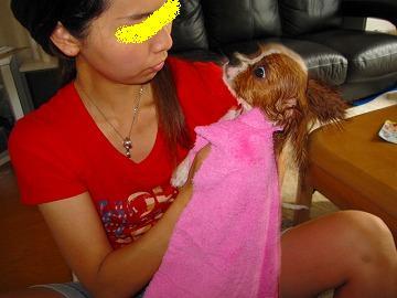 生まれたての子犬のようです!びしょぬれ。www
