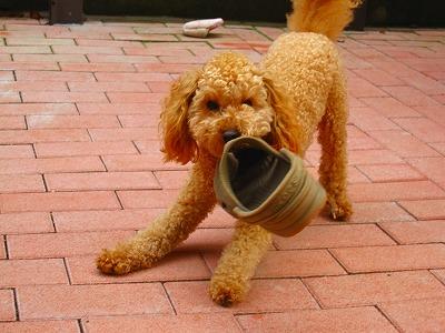 友人宅の愛犬、たろう君!