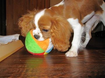 ボールで遊ぶっぴ!