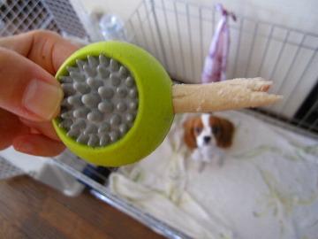 さぁ、歯磨きオヤツだよ~