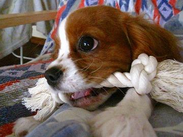 歯磨きは任せてっぴ♪v( ̄Д ̄)v