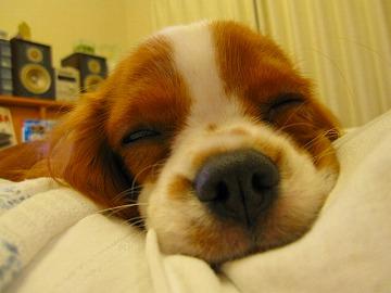 おやすみですっぴ・・・