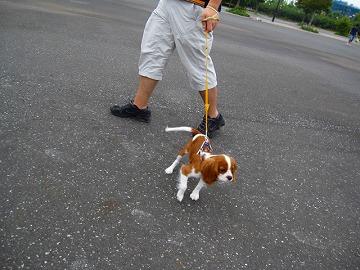 お散歩スタート!