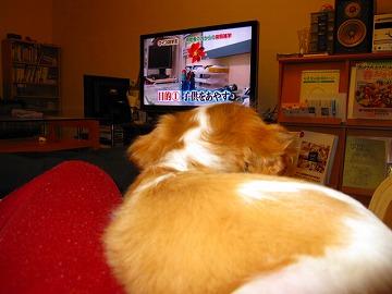 テレビ見よ