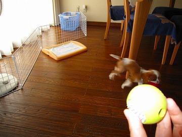 さぁ、またボールで遊ぼ!アレ?