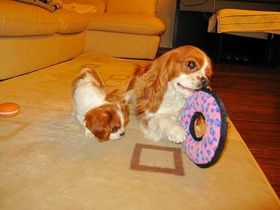 クンクン、ピンクの輪っか~♪