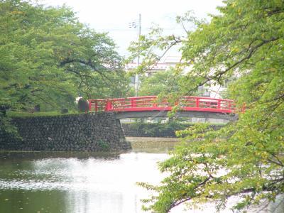 公園の桜・夏