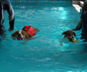 2匹で泳ぐ