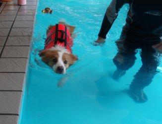 リトル泳ぐ