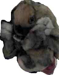 20061207123803.jpg
