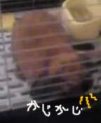 20061208115320.jpg