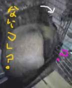 20061213010938.jpg