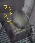 20061213011234.jpg