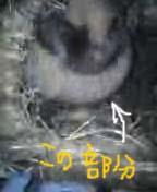 20061213011624.jpg