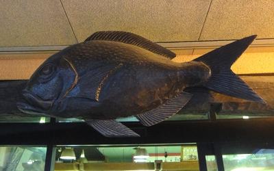 230402 魚市魚座2