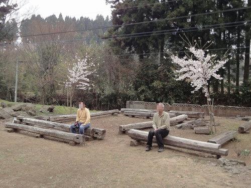 230416 赤仁田枝垂れ桜10