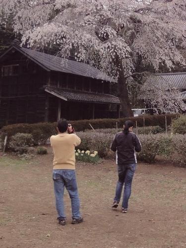 230416 赤仁田枝垂れ桜3-1