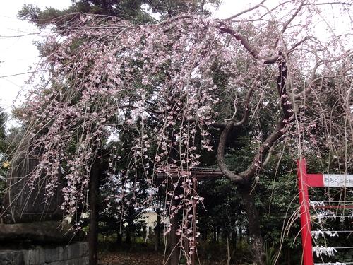 230321 松橋神社5