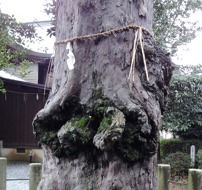 230321 松橋神社12