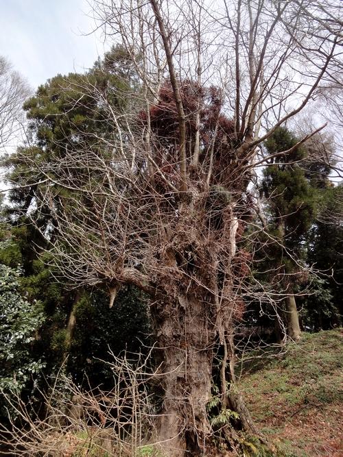 230327 郡塚神社21