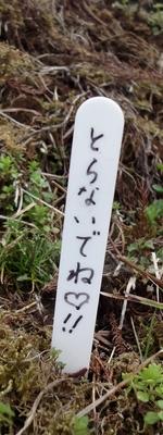 230409 高森阿蘇神社4-2