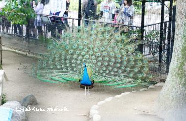 王子動物園3