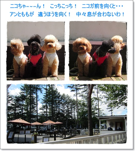 29・2011・9・18・DOG  GARDEN  RESORT1
