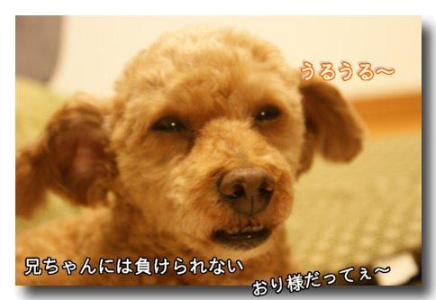 応戦.jpg
