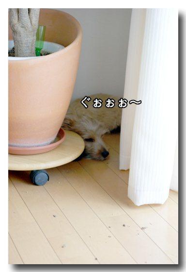 寝てるし.jpg