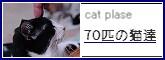 70匹の猫達~管理人:さゆりんすさん