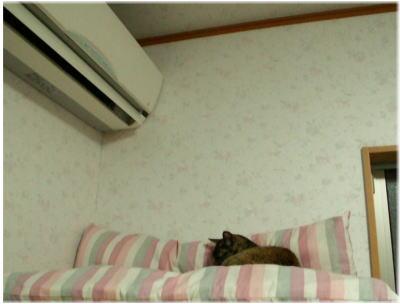 フクさん~温かいのが大好き♪