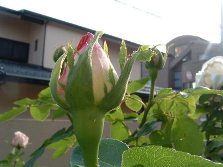 fuji08-6.jpg
