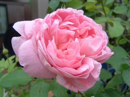 mary-rose08-11.jpg