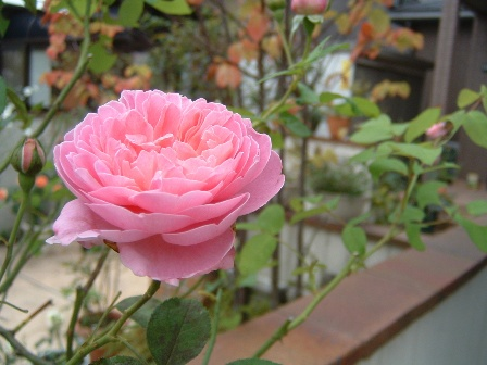 mary-rose08-12.jpg