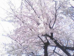 桜の下に埋めてしまおう
