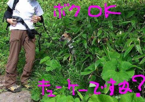aaa-0010moji.jpg