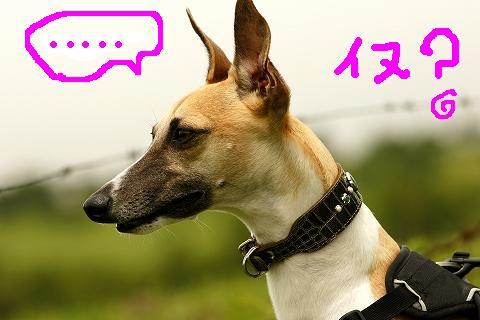 aaa-0014amoji.jpg
