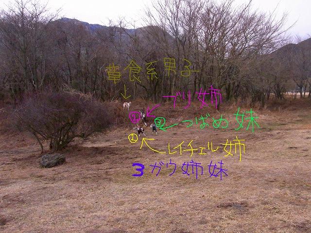 ss-015_20110117231231.jpg
