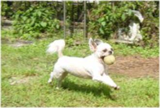 嬉しくって飛び跳ねてます。