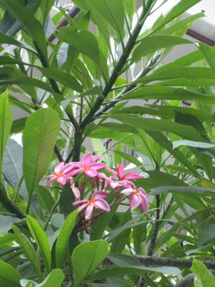 hawaii0806-054.jpg