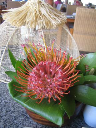 hawaii0806-090.jpg