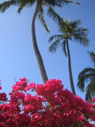 hawaii0806-094.jpg