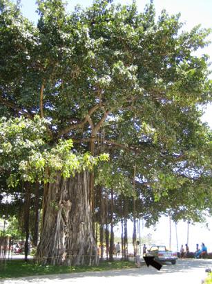 hawaii0806-118.jpg
