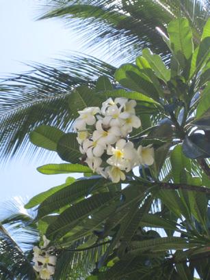 hawaii0806-122.jpg