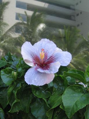 hawaii0806-124.jpg