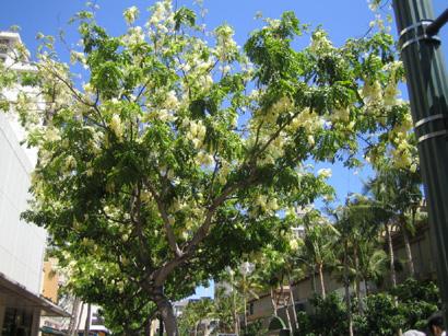 hawaii0806-125.jpg