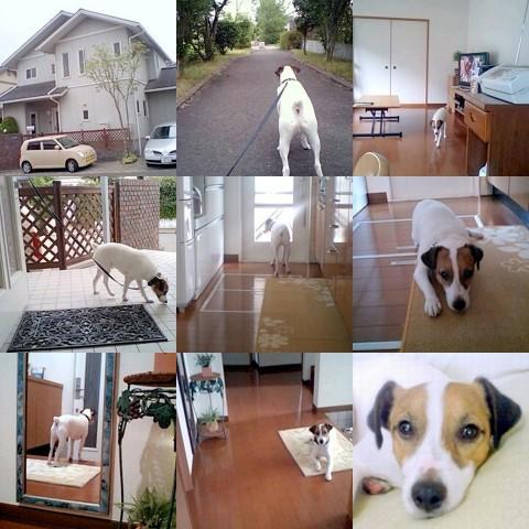 collage2-20088.jpg