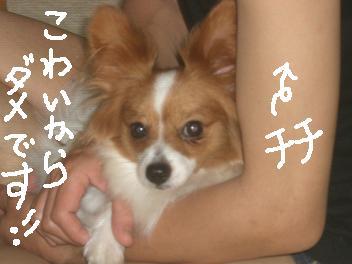 kaminari7.jpg